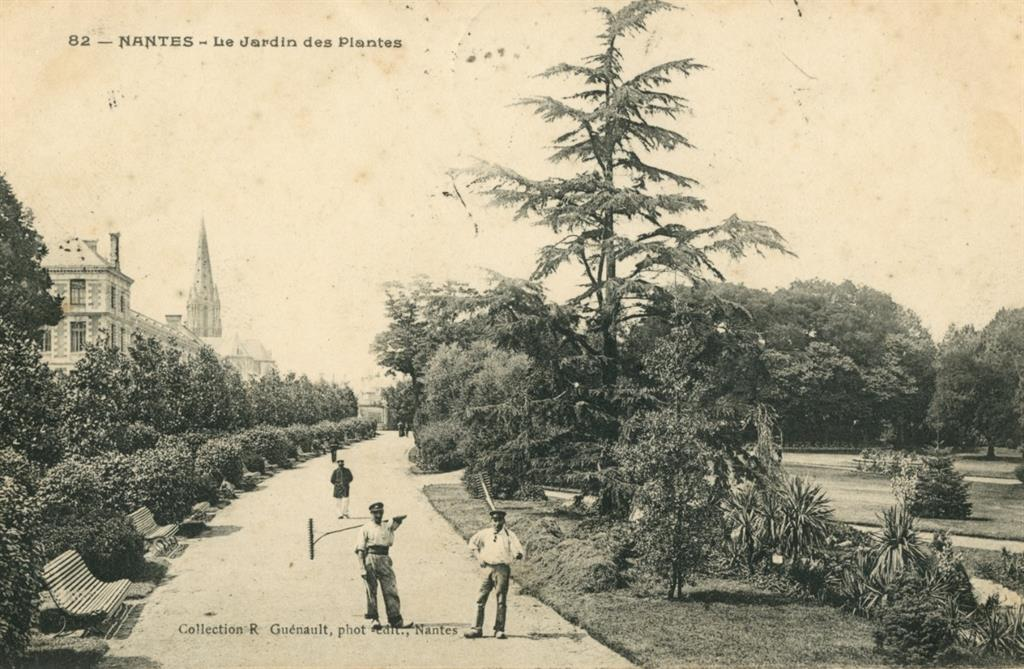Le Jardin des Plantes : au coeur du végétal - Les camélias
