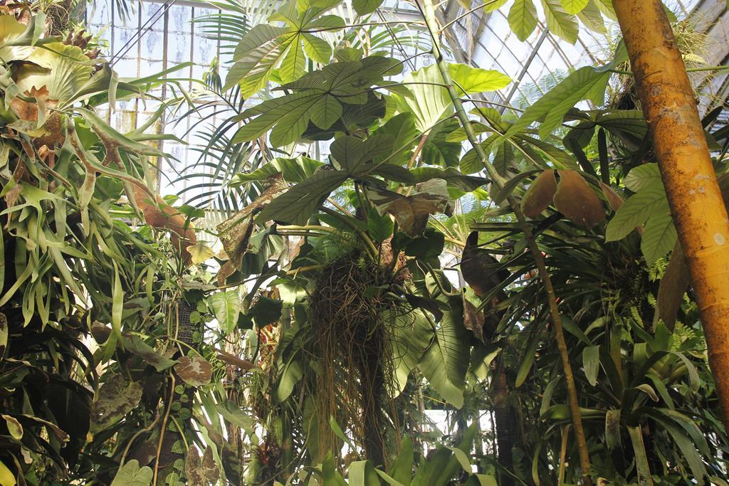 Le Jardin des Plantes : au coeur du végétal - Le Palmarium